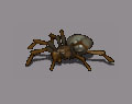 Crawling Spider