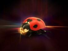 Ladybugger