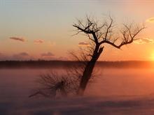 Cold Sunrise - ws