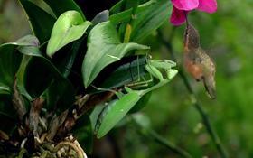 Bug & Bird