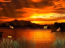 Sunset Butterflys