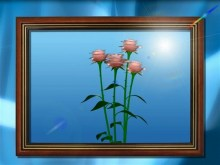 framed roses