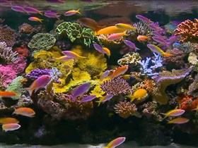 beautiful reef tank