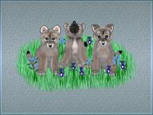 Wolf Cub Trio