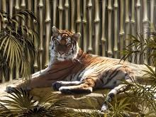 Bamboo Tiger LV