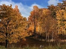 Woodland Stream LV