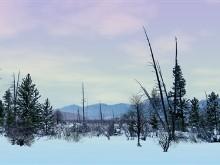Tundra LV