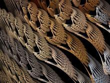 Braided Wings
