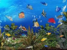 Tropical Underwater