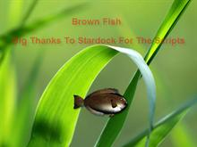 Brown Fish