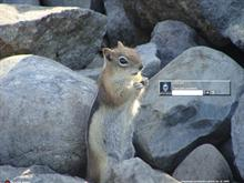 Golden Mantled Squirrel Satisfaction