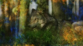Forest_Wolf_In_Color