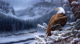 Eagle Winter